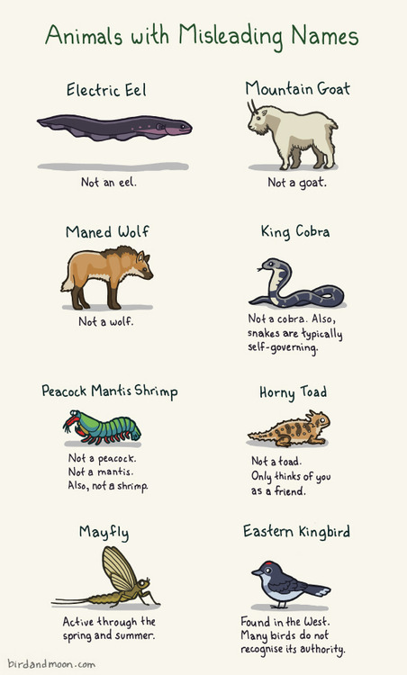 Animals with Misleading Names Poster Illustration